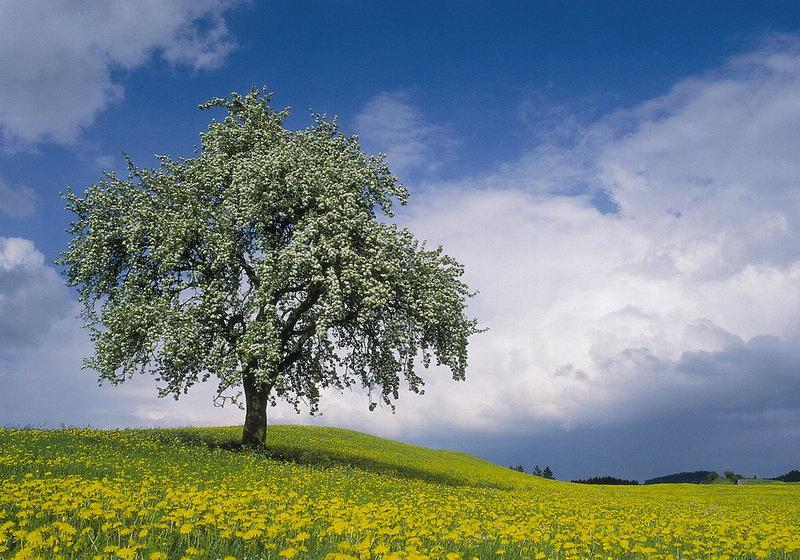 leanbaum